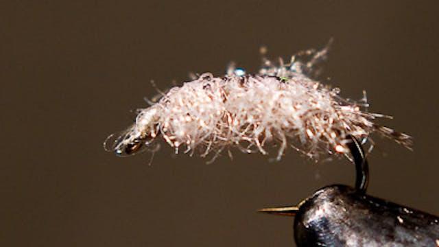 Josh Stanish: Carpet Sow Bug