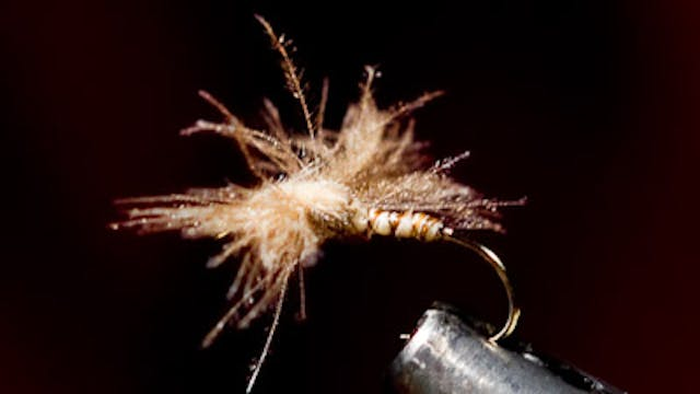 Dandy Reiner: Spent Wing CDC Caddis