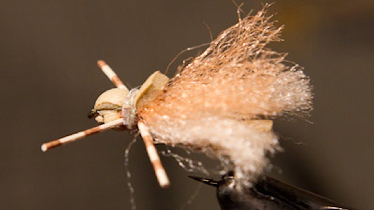 Josh Stanish: Ug Bug Spruce Moth