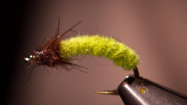 Gordon Cordova: Green Caddis Rockworm