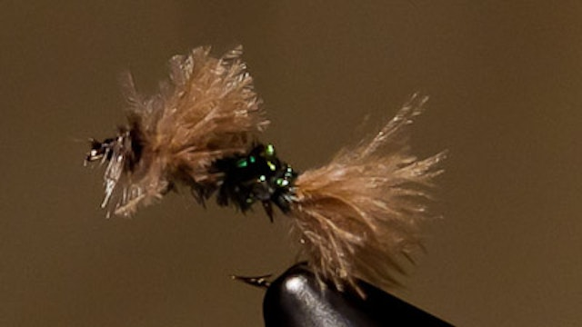 Kieran Frye: KC's Powder Puff CDC Emerger