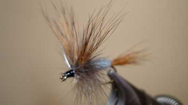 Dave McKee: Hairwing Calibaetis