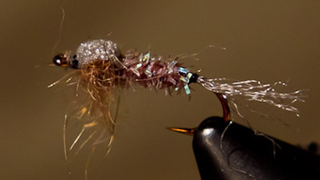 Kieran Frye: KC's Foam Back Emerger