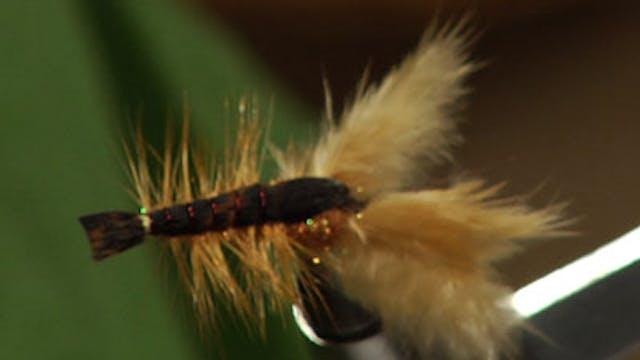 Josh Stanish: Biggie's IC Crayfish