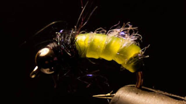 Willy Self: Larva Lace caddis