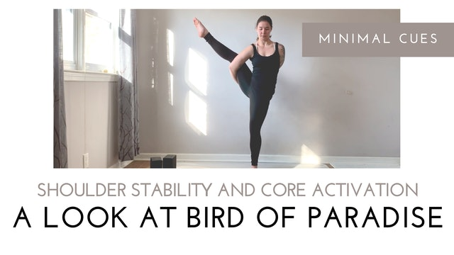 A Look at Bird of Paradise | Shoulder Stability and Core Activation