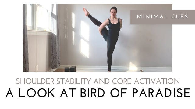 A Look at Bird of Paradise | Shoulder...