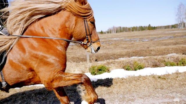 Att skapa den perfekta hästen