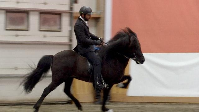 Skíma frá Kvistum får föl och tävlar samtidigt.