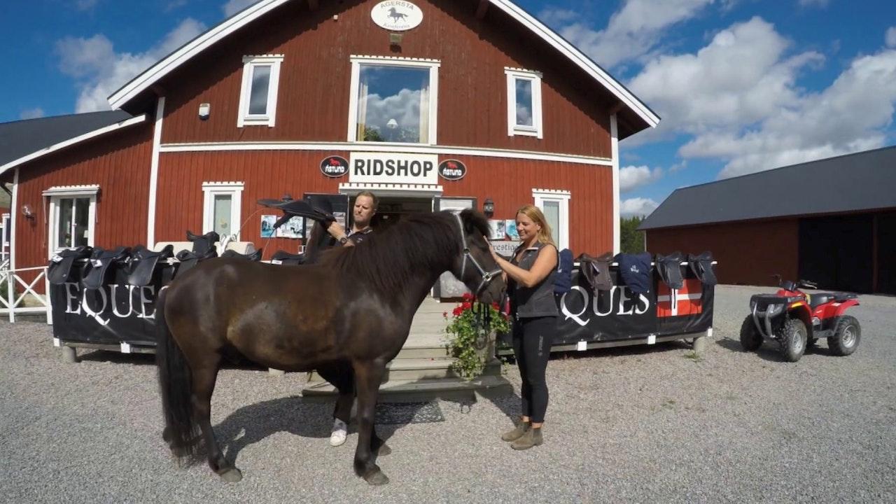 20 år inom islandshästbranschen - Agersta Islandshästar
