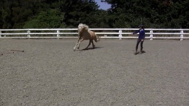 Draumur- trying new 'fancy trot' unde...