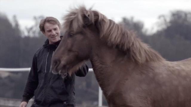 Icelandic horses- magic