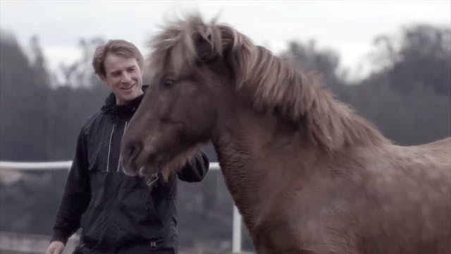 Icelandic horses- magic