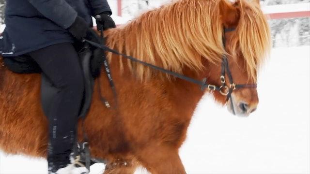 Del 4: Arbete med den lugna och säkra hästen.