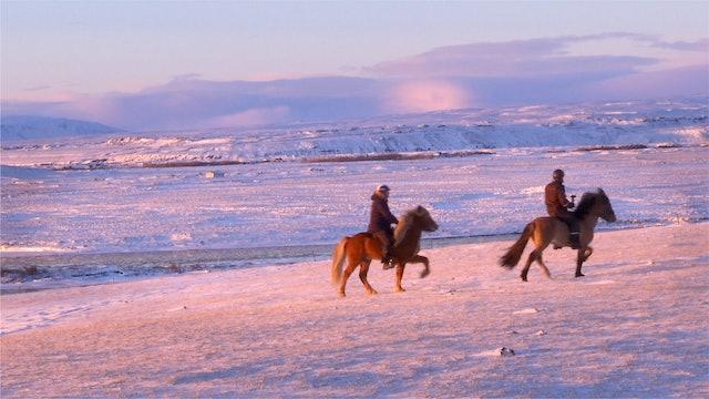 Två hingstar, två hestamenn - en drömritt.