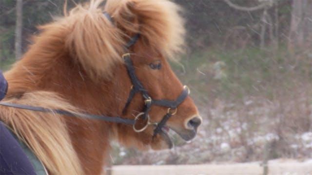 27 februari -17: Spända hästar har ...