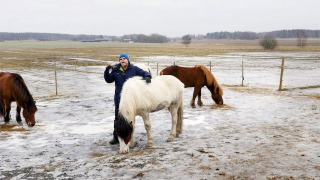 Haffis grunder del 5: När hästen blir rädd