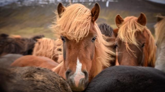 Var beredd om hästen skadar sig