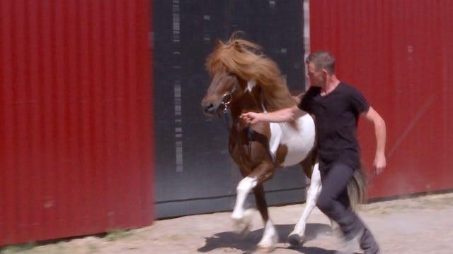 Tjugo hästar och en Reynir