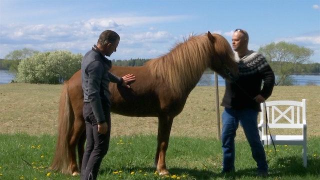 Om hull: Hur får man hästen i fint hull?