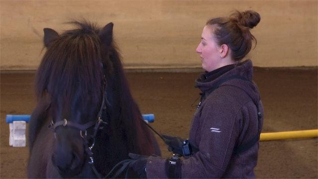 Del 5: En häst som är lite överkänslig måste vi göra mindre känslig.