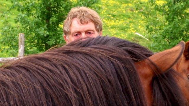 Köpa häst - del 1