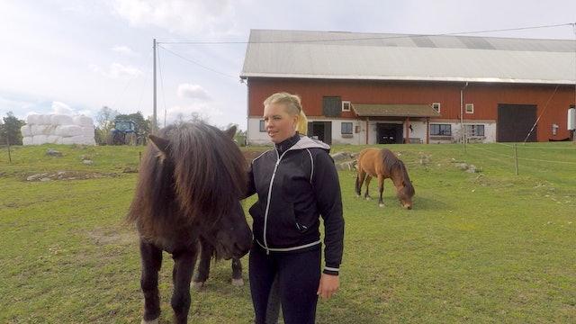 Karolina och hästarna på Ryssbo Gård