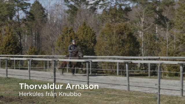 Thorvaldur Arnason  Herkúles från Knubbo