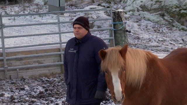 Del 8: Förr fick hästarna ibland fo...