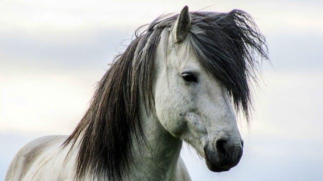 Icelandic Breeders – Part 6