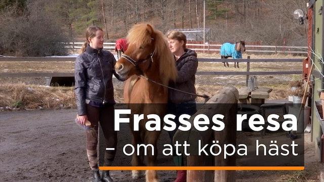 Frasses resa - om att köpa häst