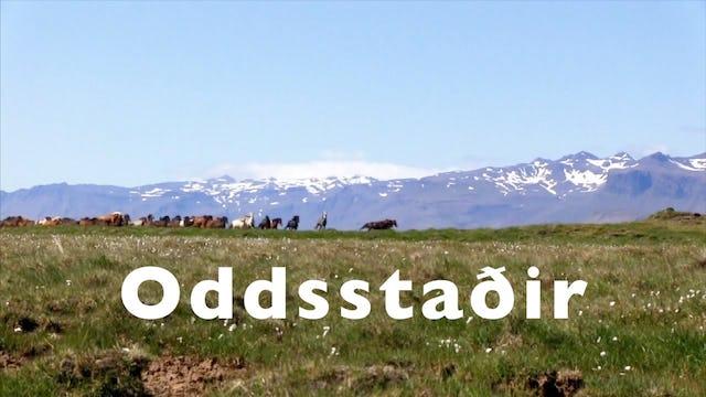 Häng med till Oddsstadir i  Borgarfjörður.