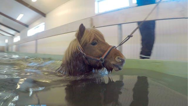 Simbassäng för hästen
