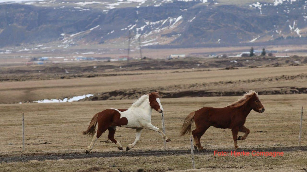 Icelandic Horse Expo 2019, part 1