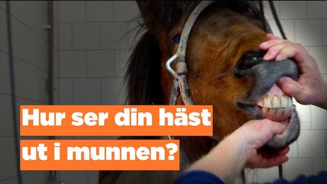 Hur ser din häst ut i munnen?