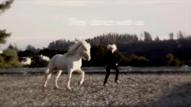 Horses- this is why