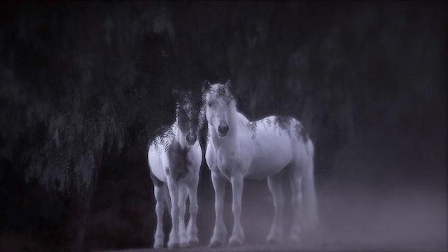 Xenophon's Dream-HD