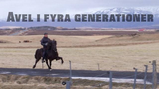 Þóroddsstaðir – avel i fyra generationer