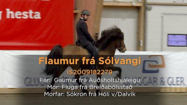 Flaumur frá Sólvangi