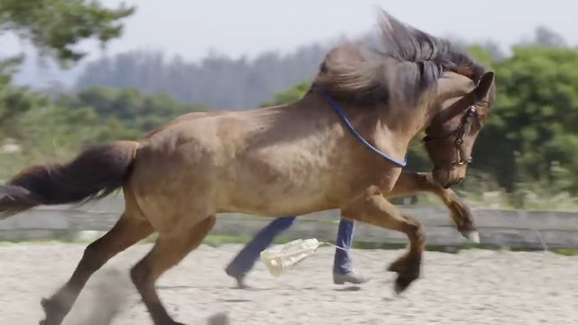 Horses want you to know they're awesome