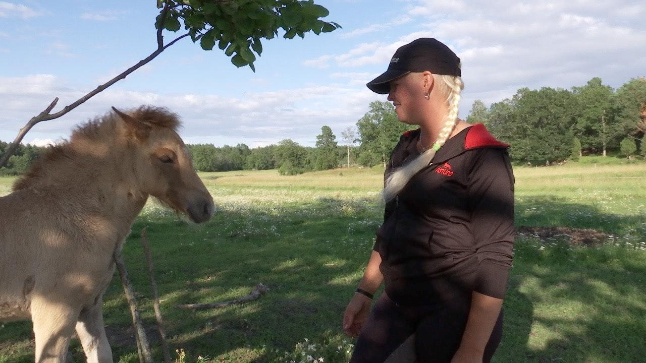 Hästföretagaren Karolina