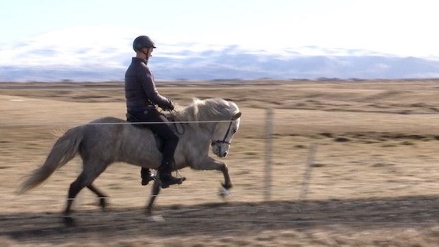 Icelandic Horse Expo spring 2019 part 2