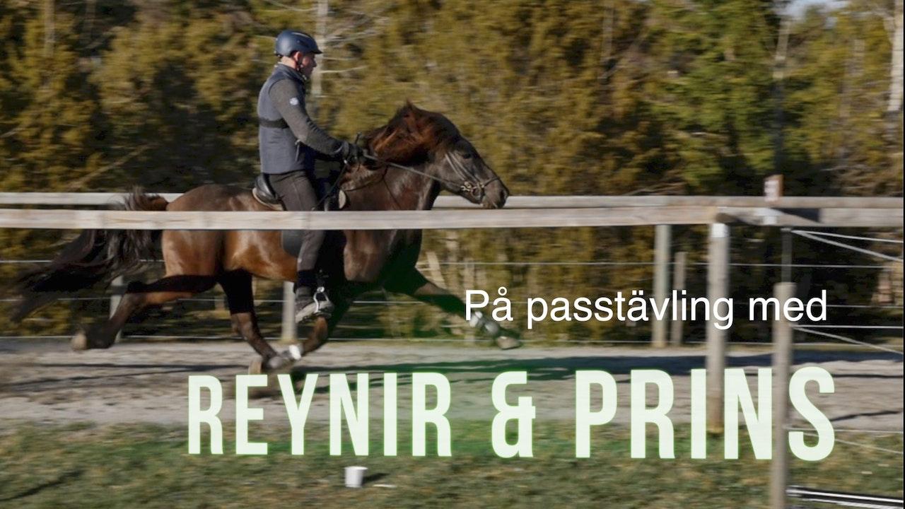 Passtävling med Reynir och Prins