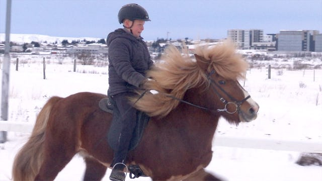 Pojken och hingsten/The boy and the stallion