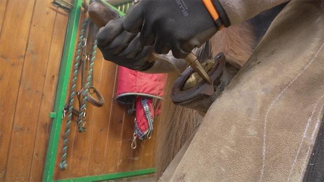 Del 4: Vad gör jag om hästen inte vill skos?
