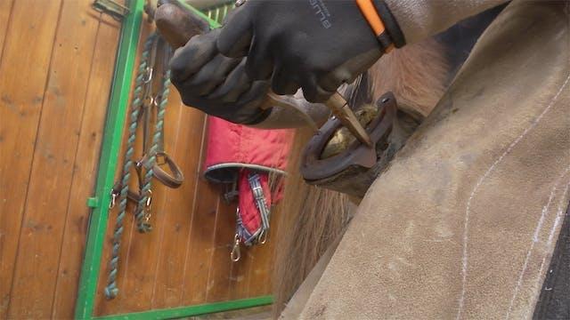 Del 4: Vad gör jag om hästen inte v...