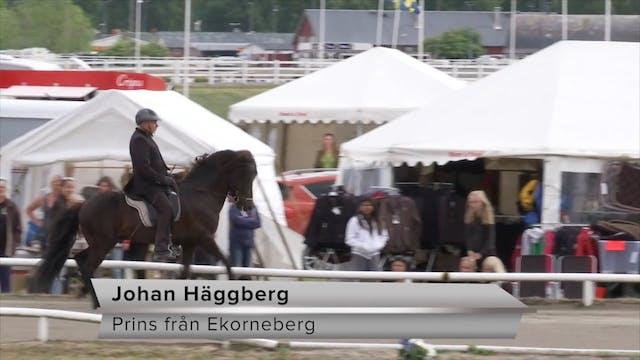 Johan Häggberg - Prins från Ekorneberg