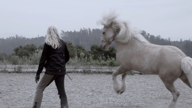 Every horse is amazing