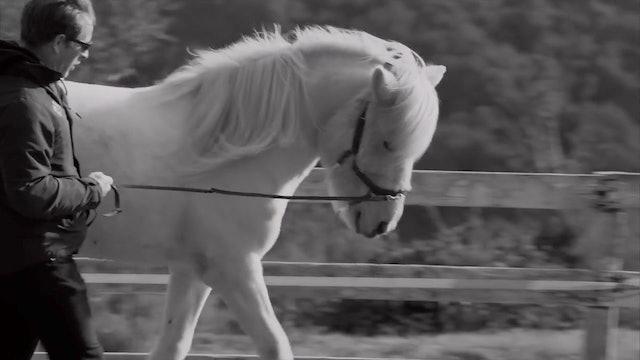 Horse-designed Training- in-hand tolt