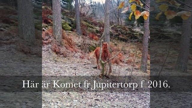 Komet fr Jupitertorp